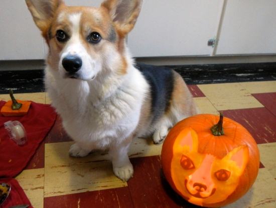 alison's corgi | movita beaucoup